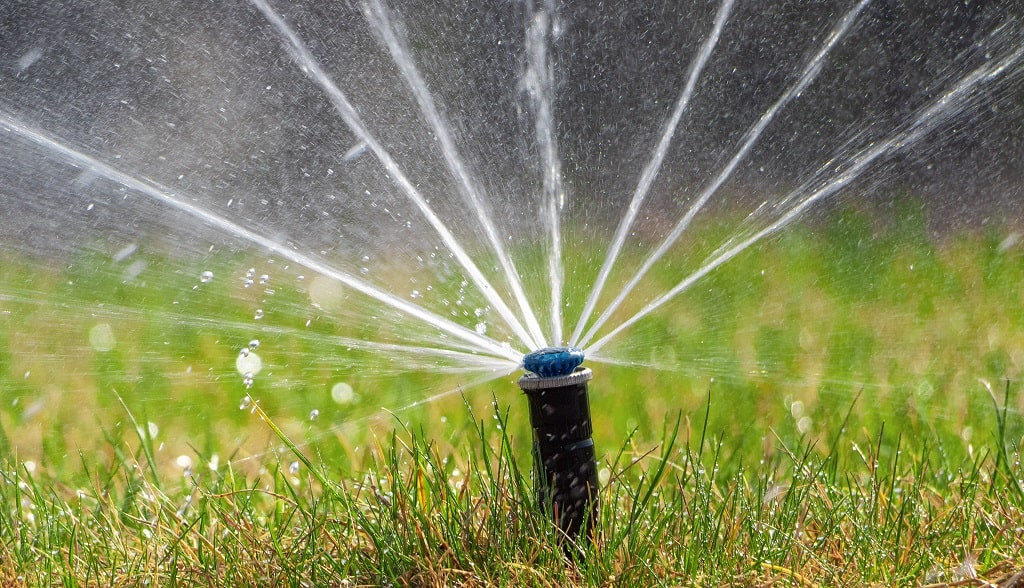 Mistakes when Lawn Watering