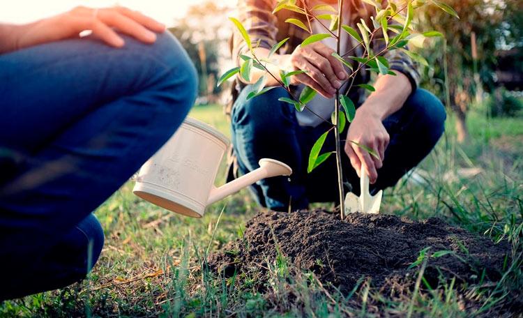 Feeding Trees and Shrubs