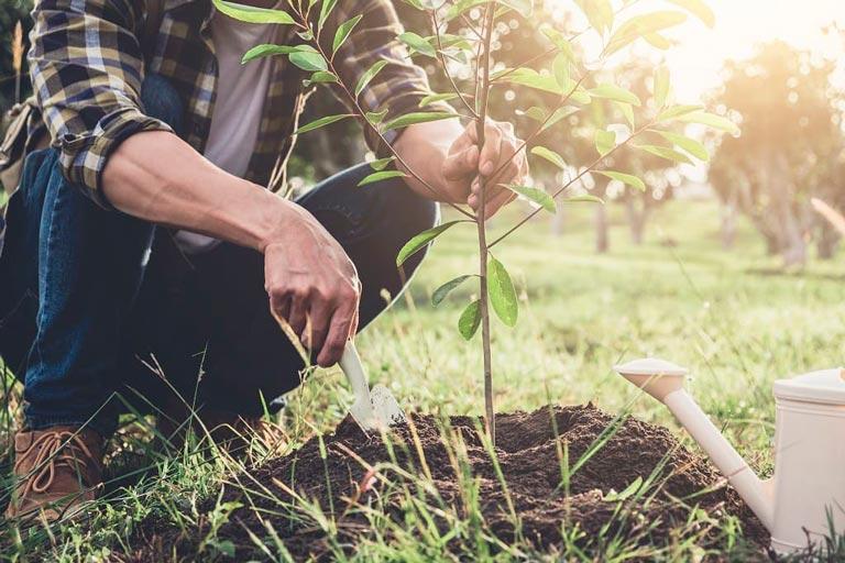 Deep Feeding Your Trees