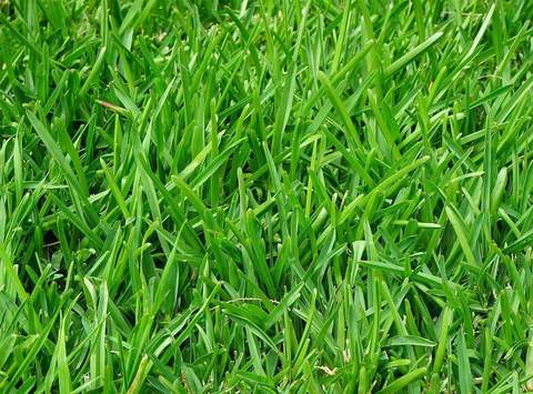 Ryegrass does well in Wisconsin yards that are shady.