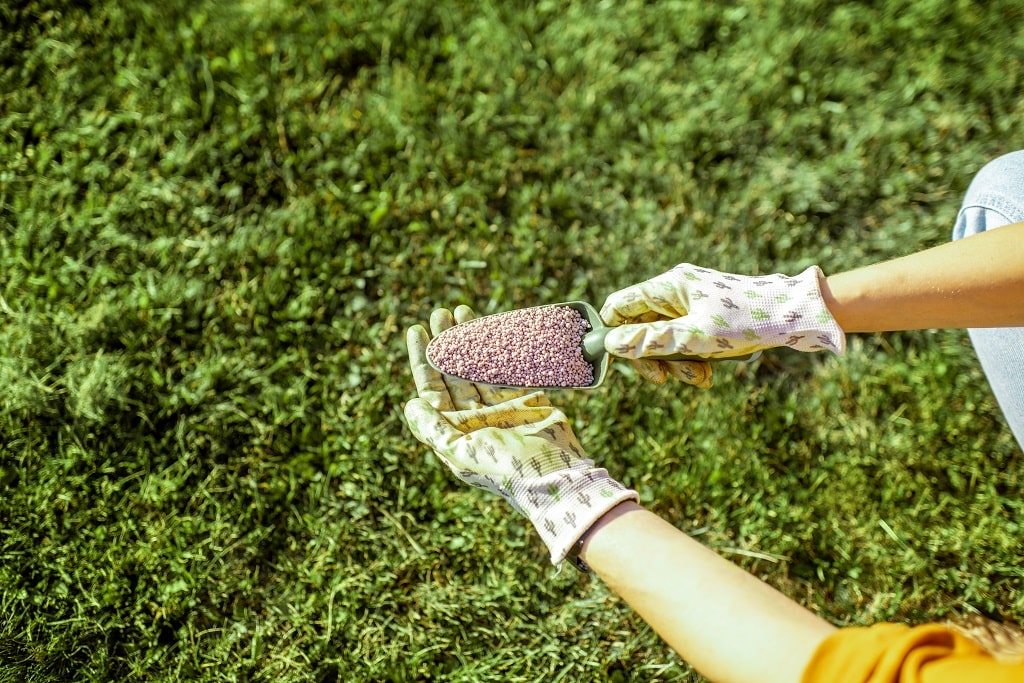Grass Fertilizer for Green Spring Lawn