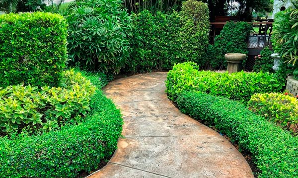 Rejuvenating Old Shrubs: When, Why and How?