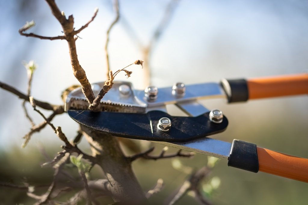Why to Prune Your Trees