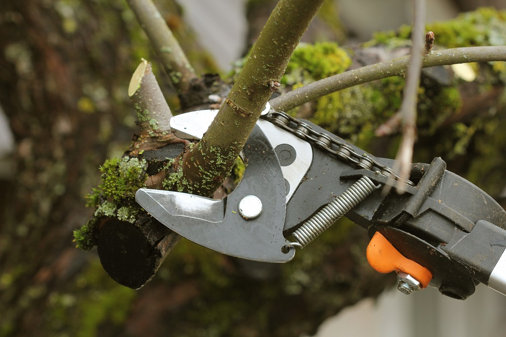 Pruning Trees Benefits