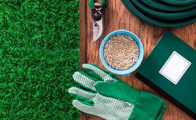 Overseeding Your Lawn: What It Is, and How To Do It