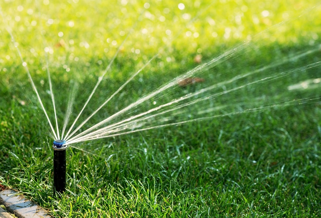 Lawn Types Watering