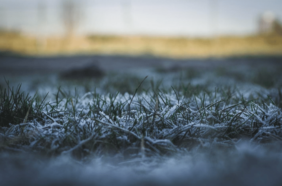 Grass lawn with frost on the blades.