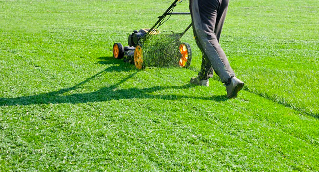 Lawn Care and Lawn Maintenance – What's the Difference?