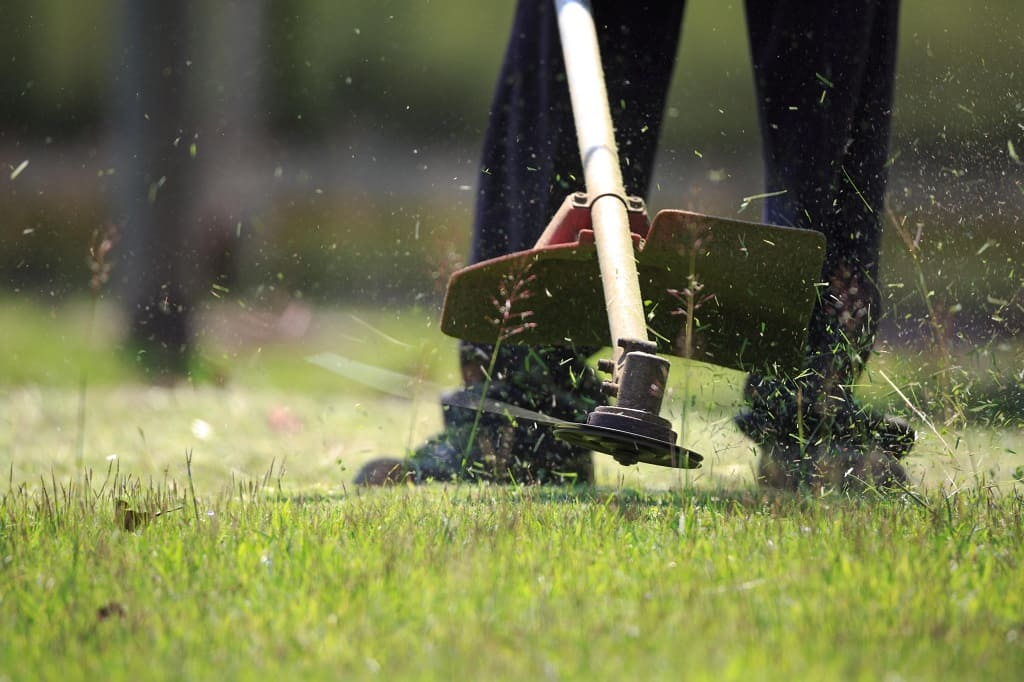 The Difference between Lawn Care and Maintenance