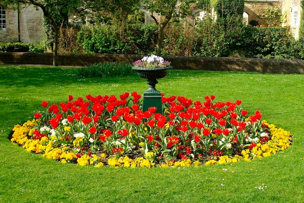 Improving Your Landscape This Spring Plant Growth