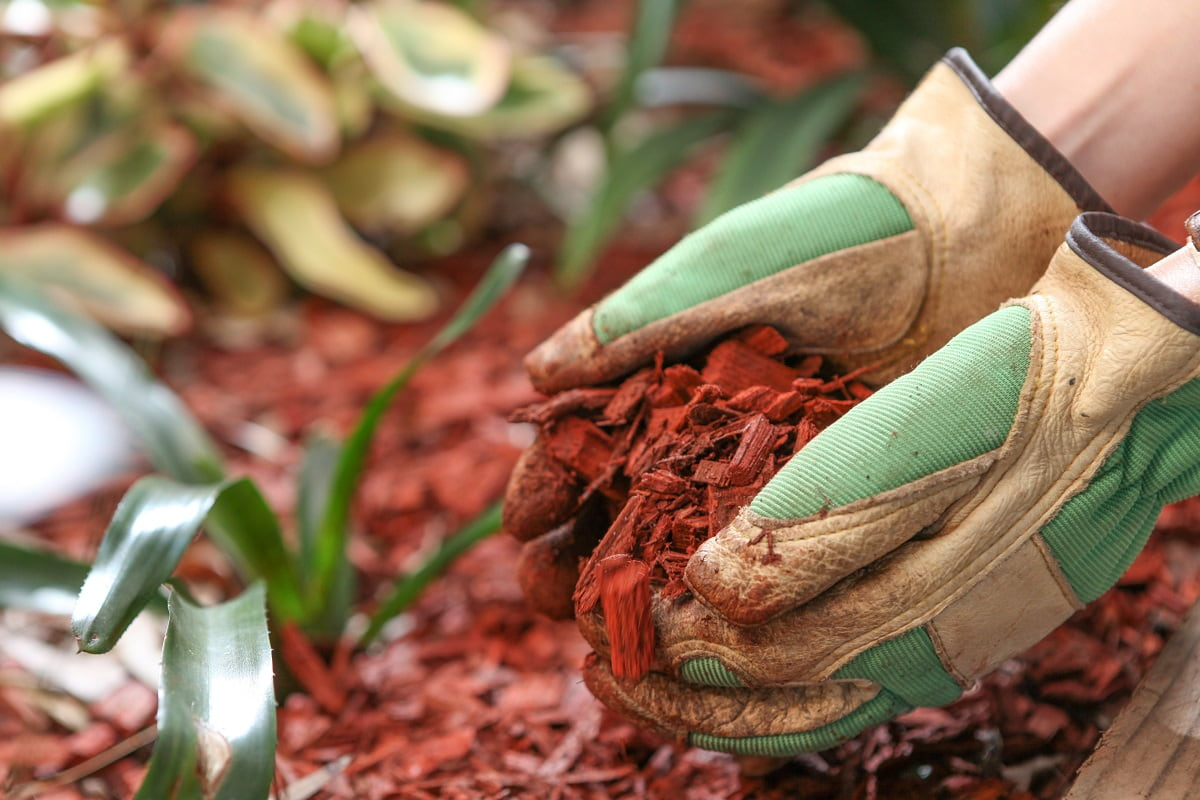 How to Stop Weed From Growing in Mulch Beds - TOP 3 Ways