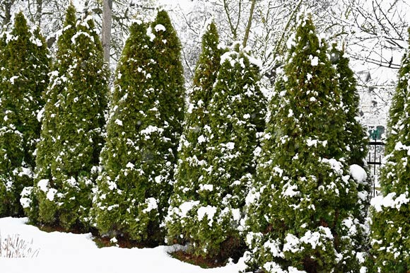 How to Protect Trees in Winter