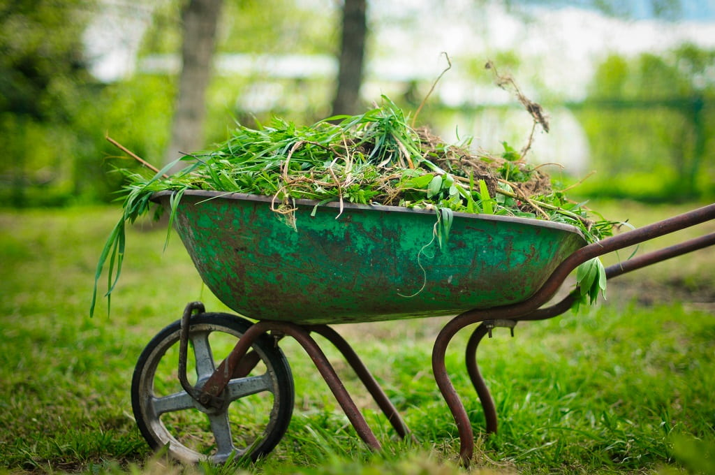 How to Get Rid of Wild Violets and Ground Ivy in Your Commercial Property's Lawn