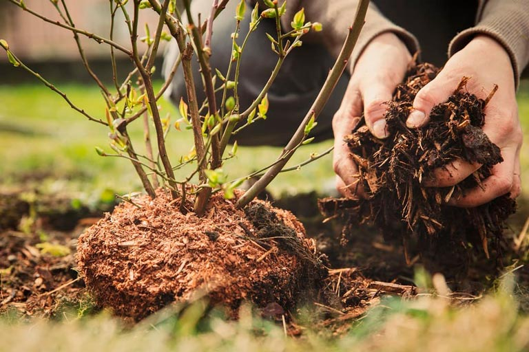 Garden Mulch: What Is It, and Why Does My Commercial Building's Garden Need It?