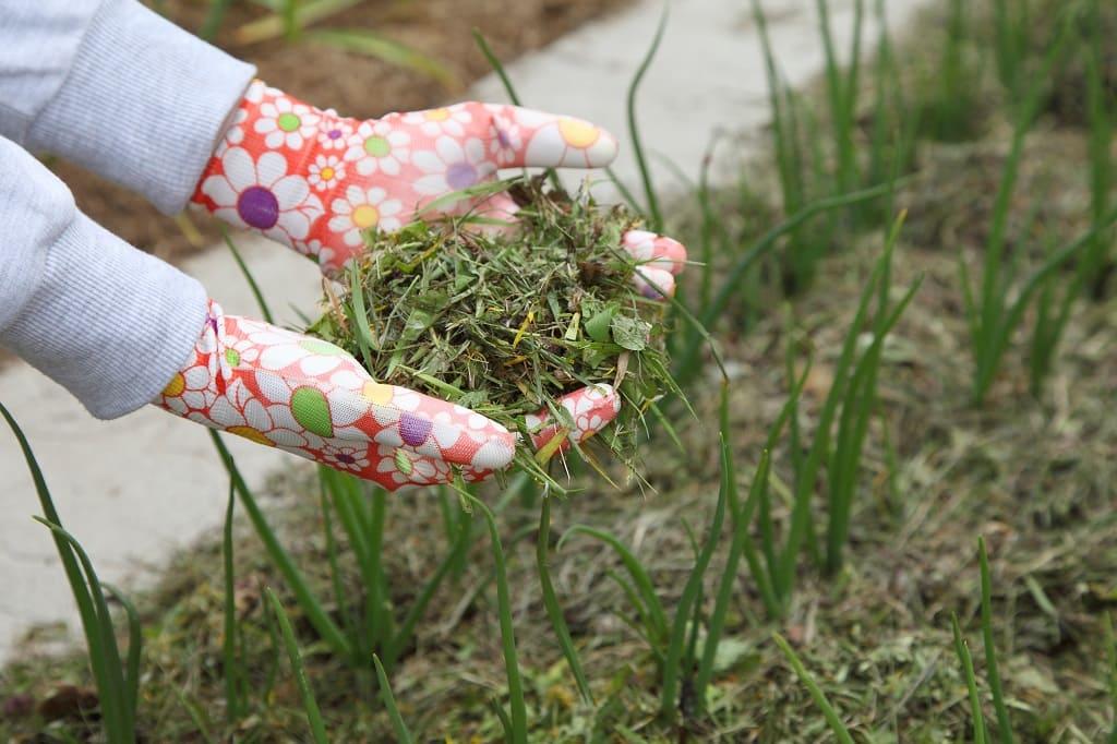 Mulch Grass