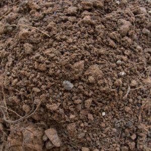 Fill dirt is found below topsoil and lacks nutrient rich organic matter.