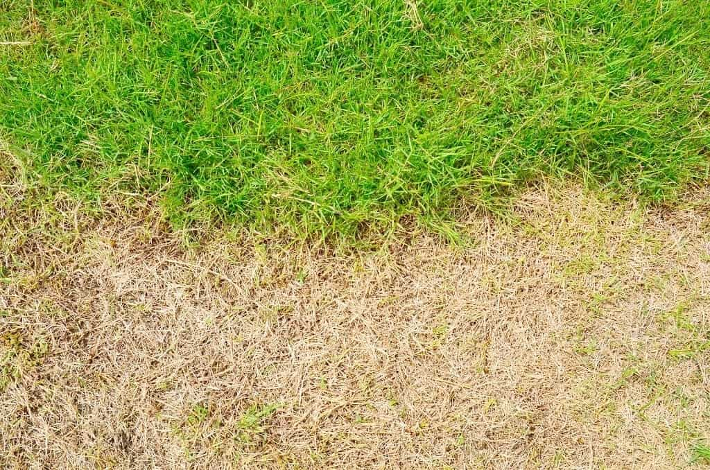 Dormant Grass vs Dead Grass - What's the Difference?