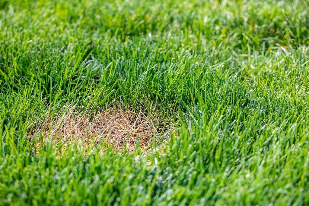 What Is Dormant Grass