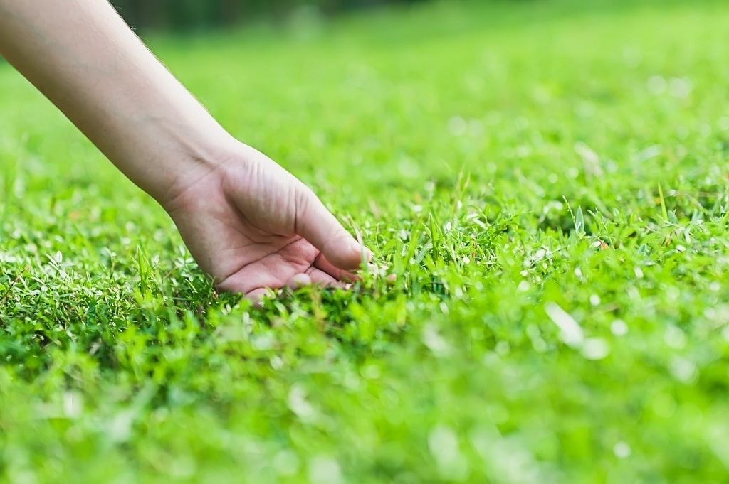 Tug Test Dormant Dead Grass