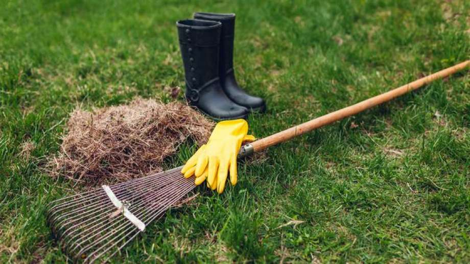 Beginners Guide To Lawn Dethatching