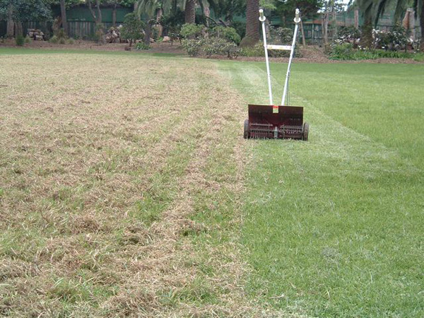 a lawn before and after dethatching