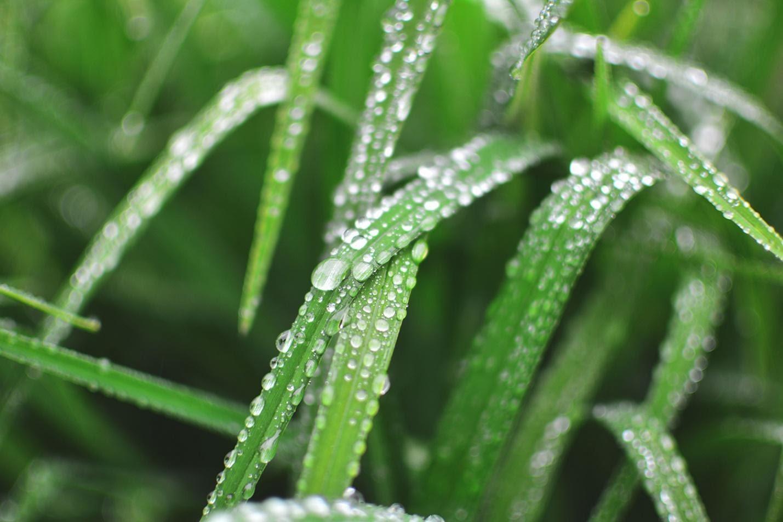 Use a Rain Gauge