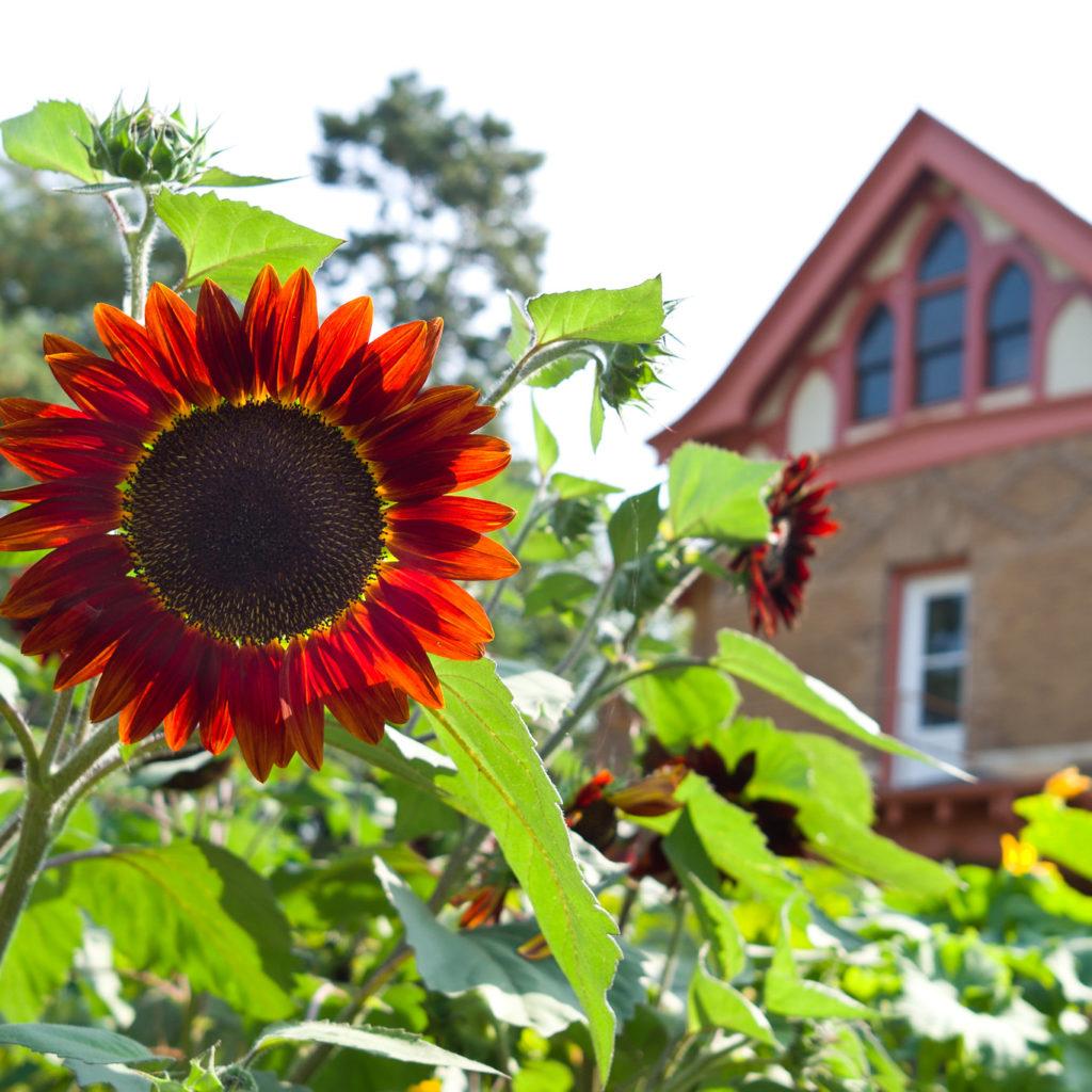 Allen Centennial Gardens in Wisconsin