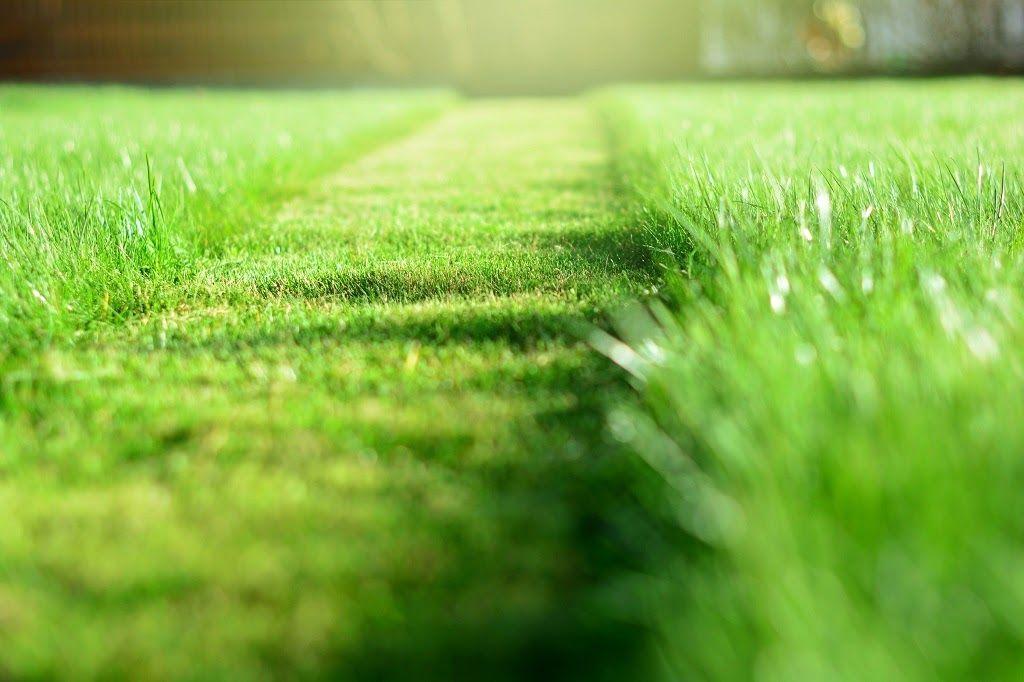 What Is Lawn Fertilization?
