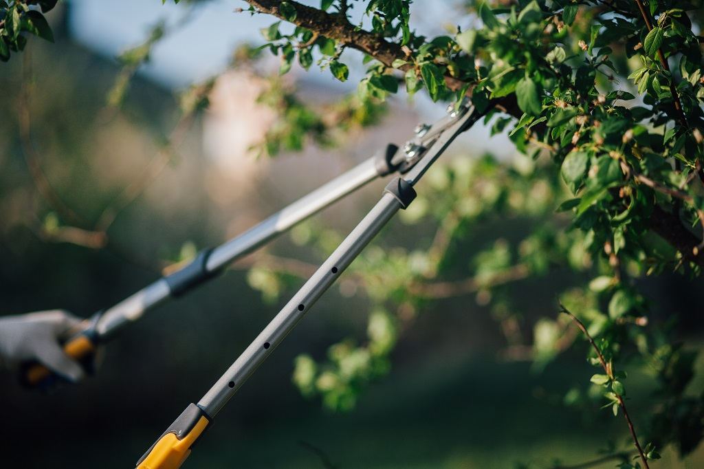 Trusted tree trimming and pruning experts