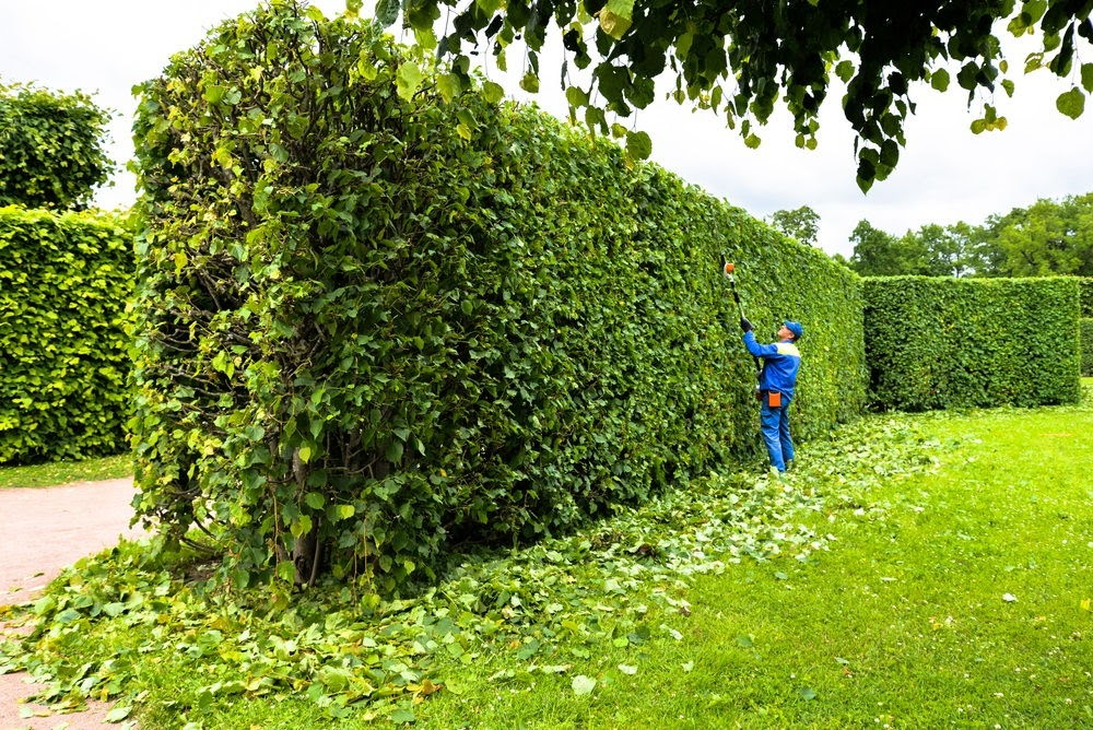 Why Clients Say We're the Best Tree Care Maintenance Company in the Midwest
