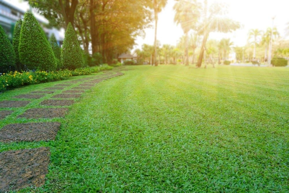 Why Businesses Think Our Dethatching Lawn Care Services Are the Best