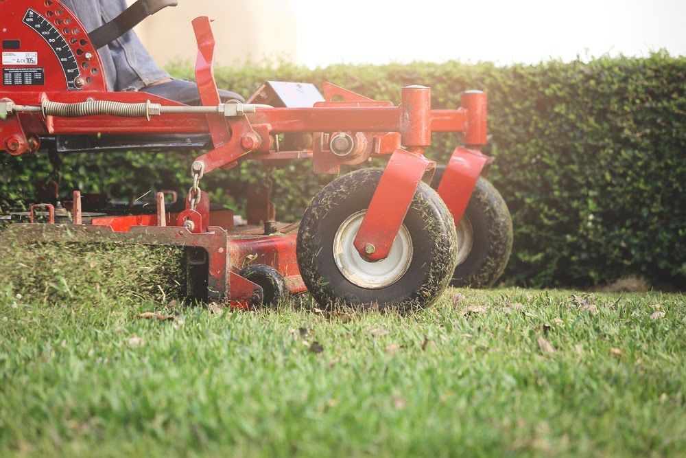 What to Expect from a Lawn Clean Up