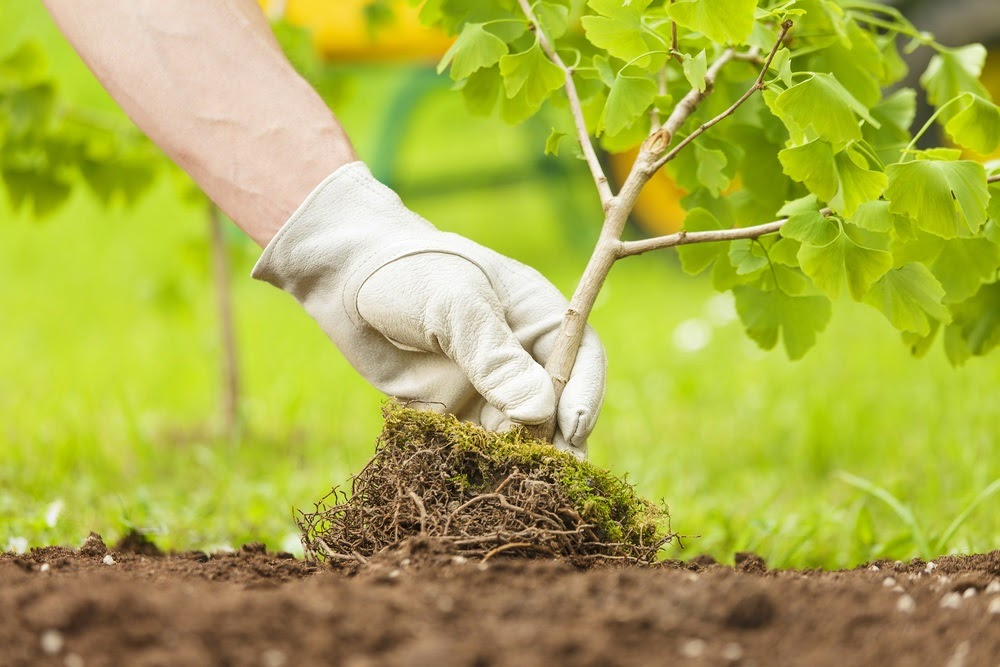 Earth Development brings you every commercial landscaping service your business property will ever need.