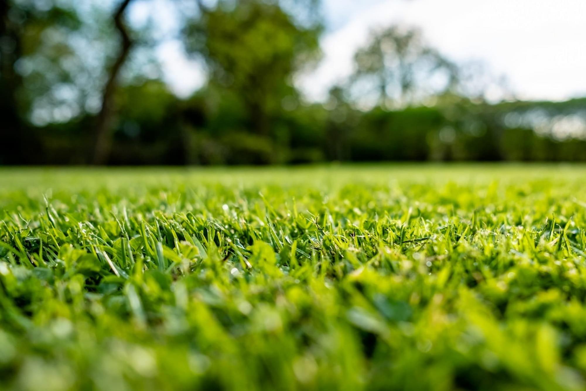 Sheboygan, WI - Landscaping