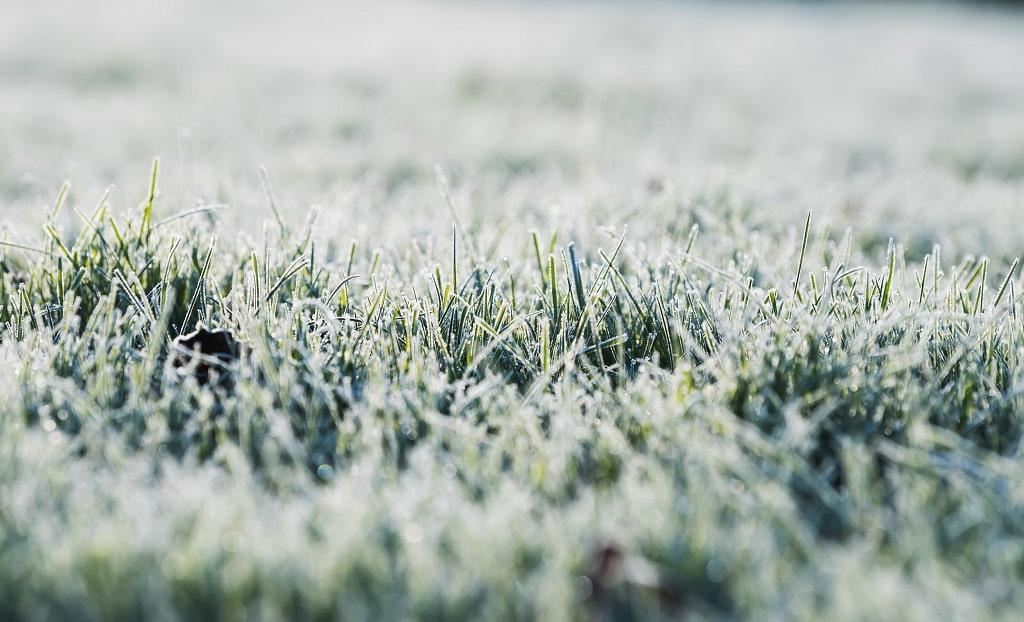Winter Landscape: Plant-Safe Deicers