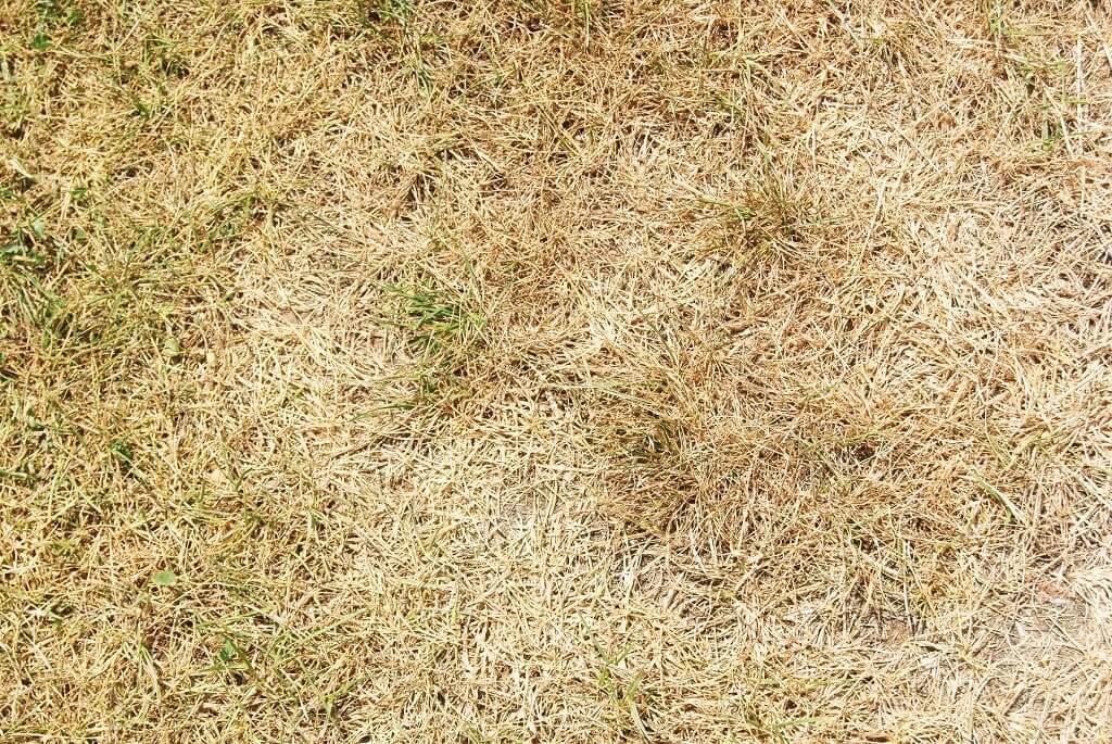 The salt-damaged grass