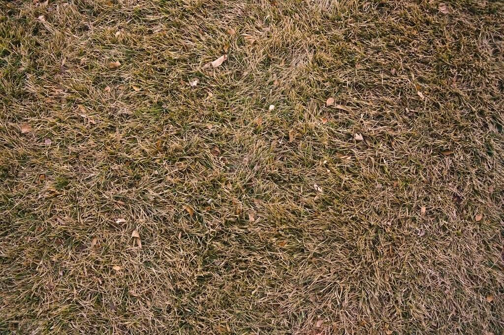 How to Save Brown Grass