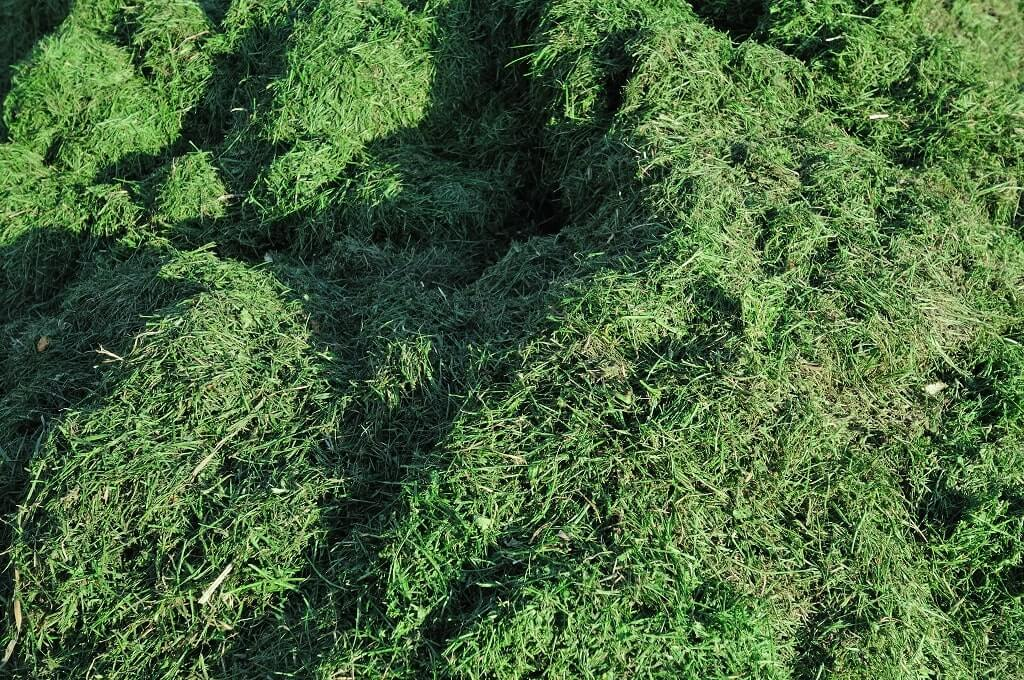 Grass Clippings Lawn Care Mistakes