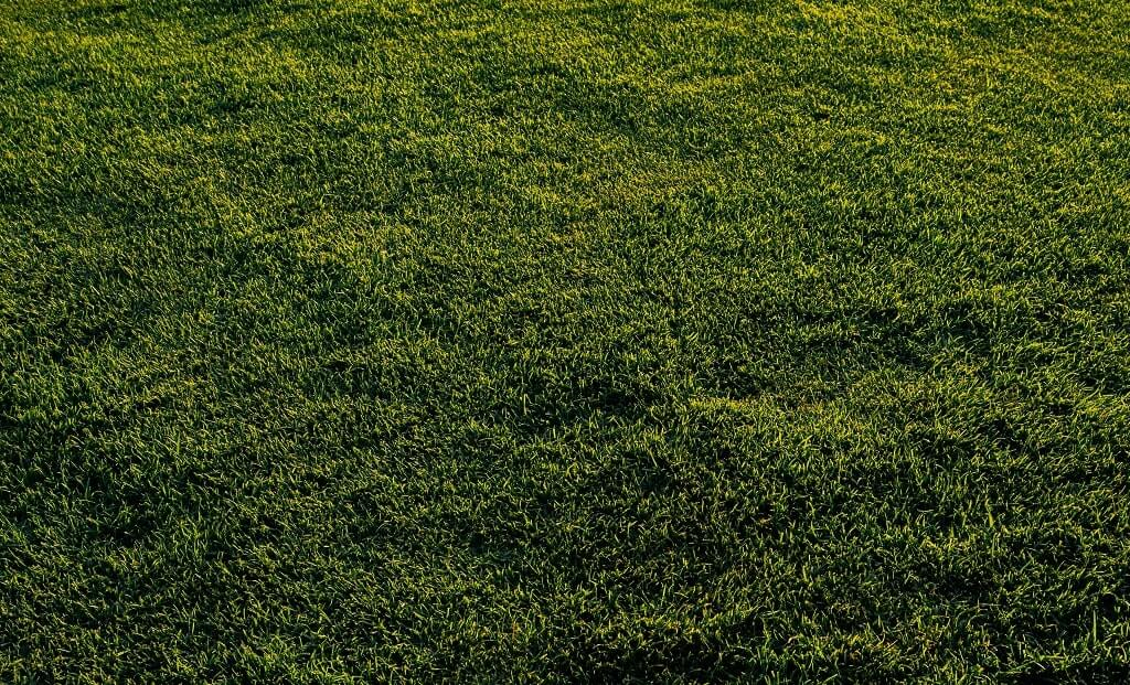 When to Scalp the Lawn