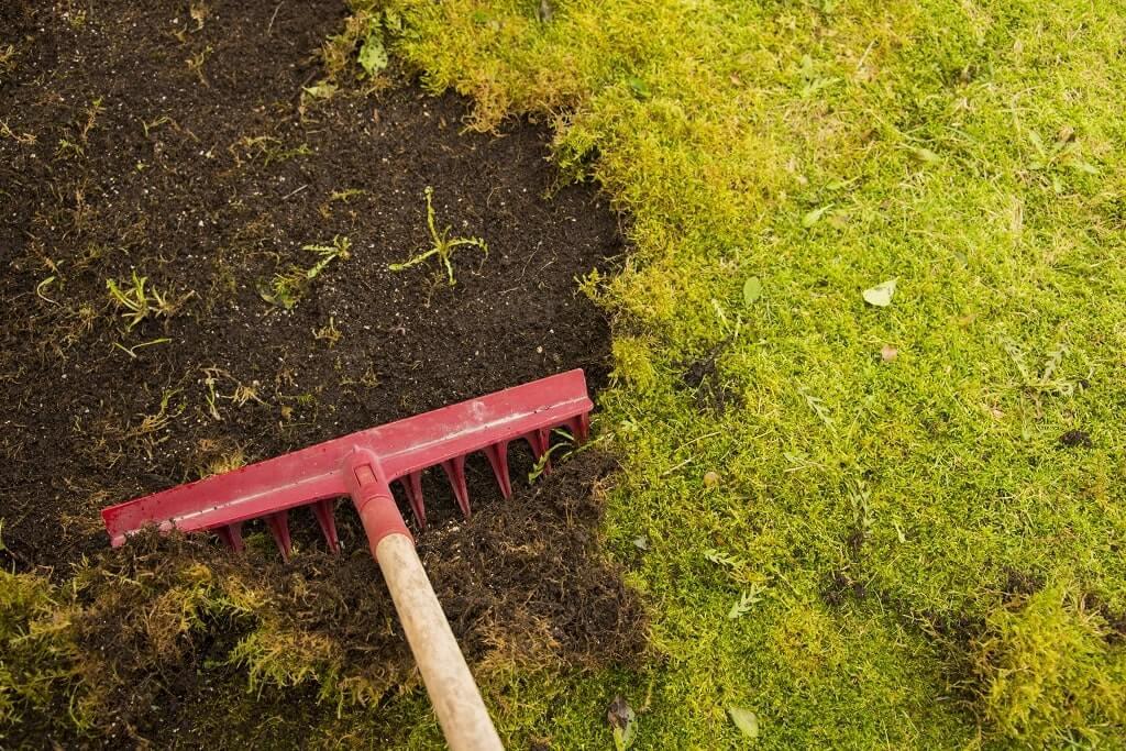 Top Best Ways to Kill Grass min