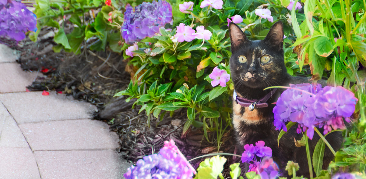 Cat standing in purple flowering bush