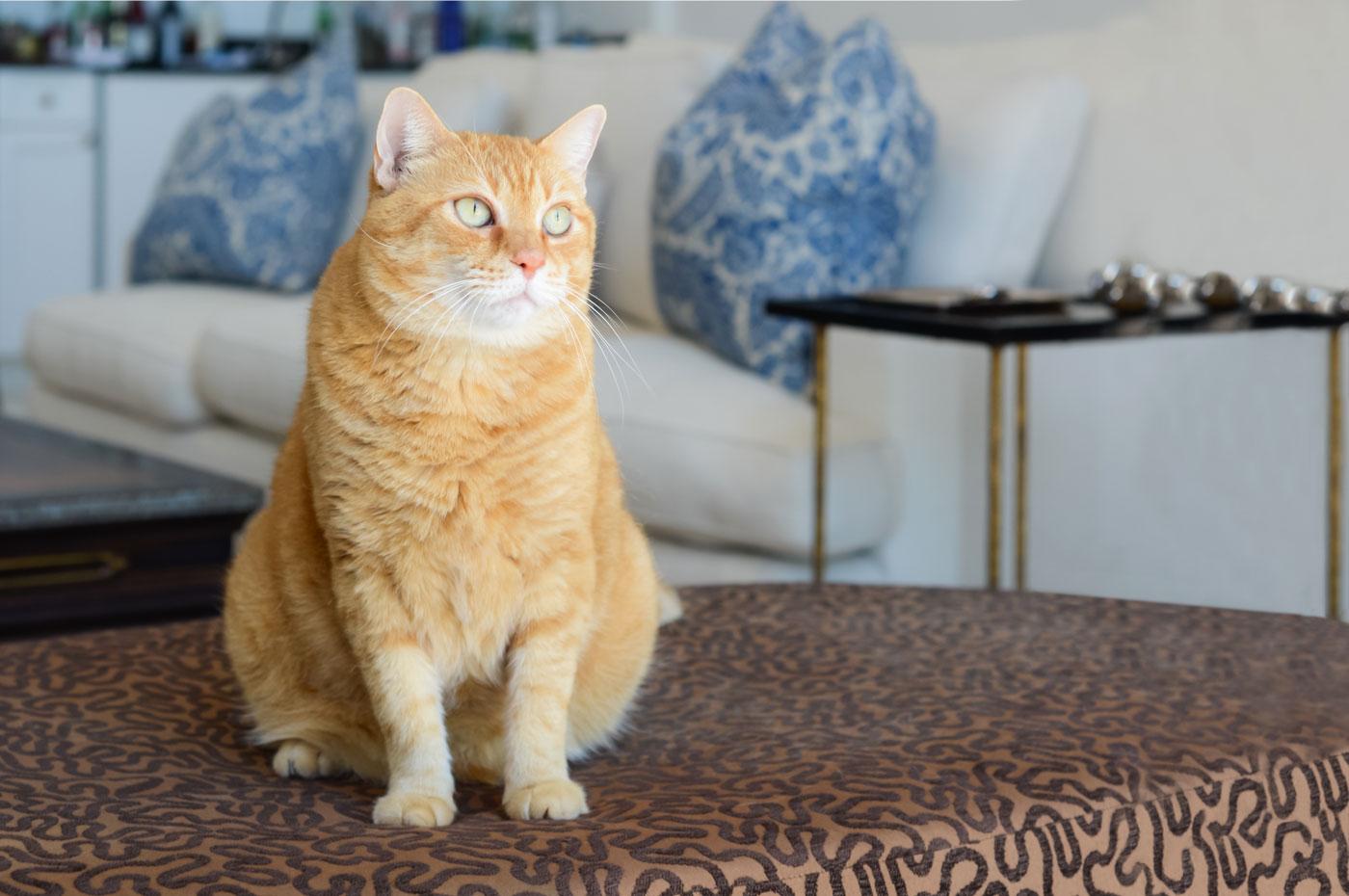 Cat sitting inside