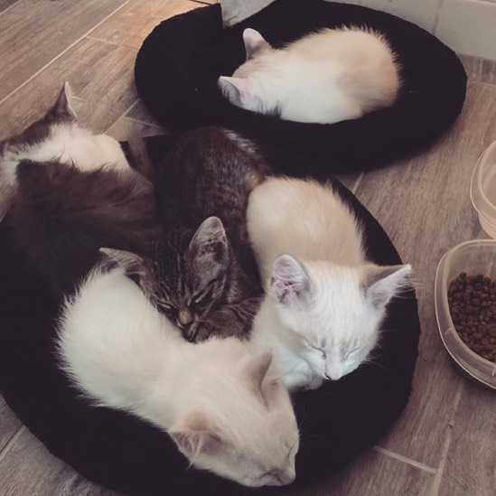Dark and light colored kittens sleeping together