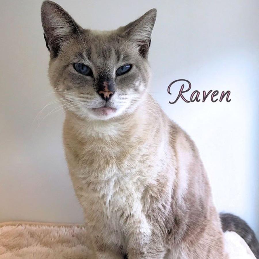 Cat named Raven
