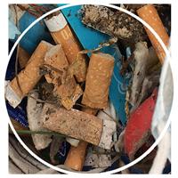 Ein wichtiges Sammelgut bei unseren Clean Ups sind Kippenstummel, die eine große Bedrohung für Mensch und Tier darstellen.