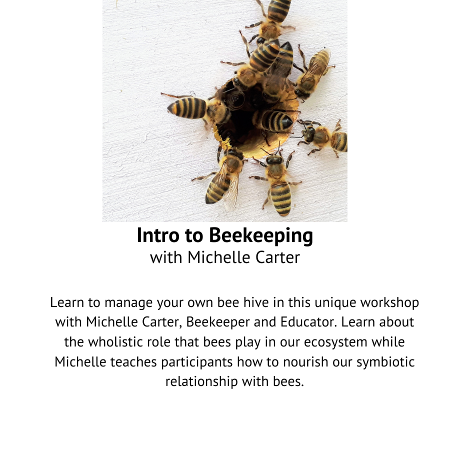 Intro to Beekeeping with Michelle Carter