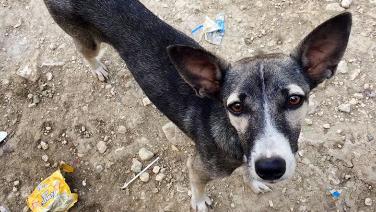 Rescue dog in Desab.