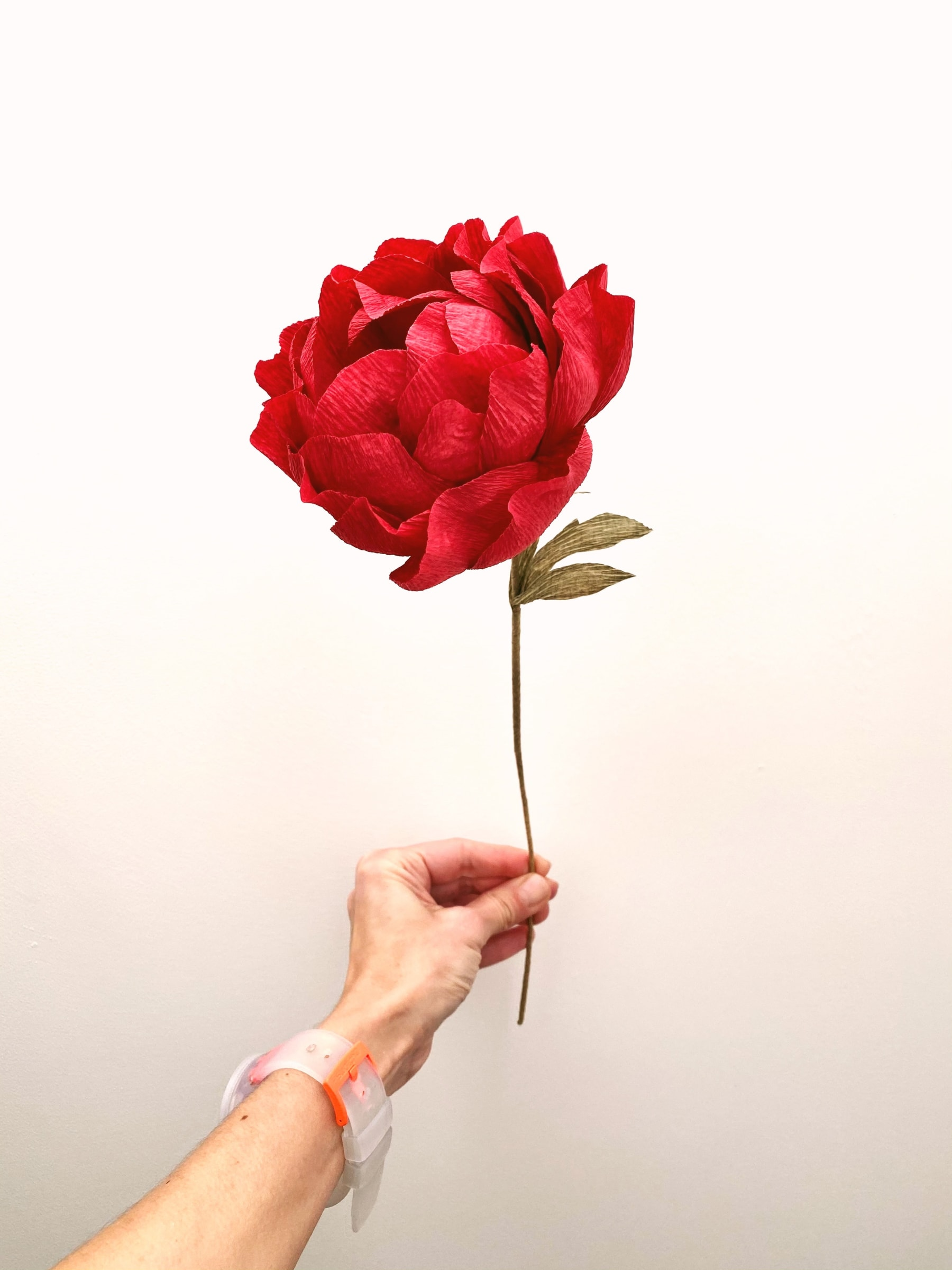 Red Paper Peony