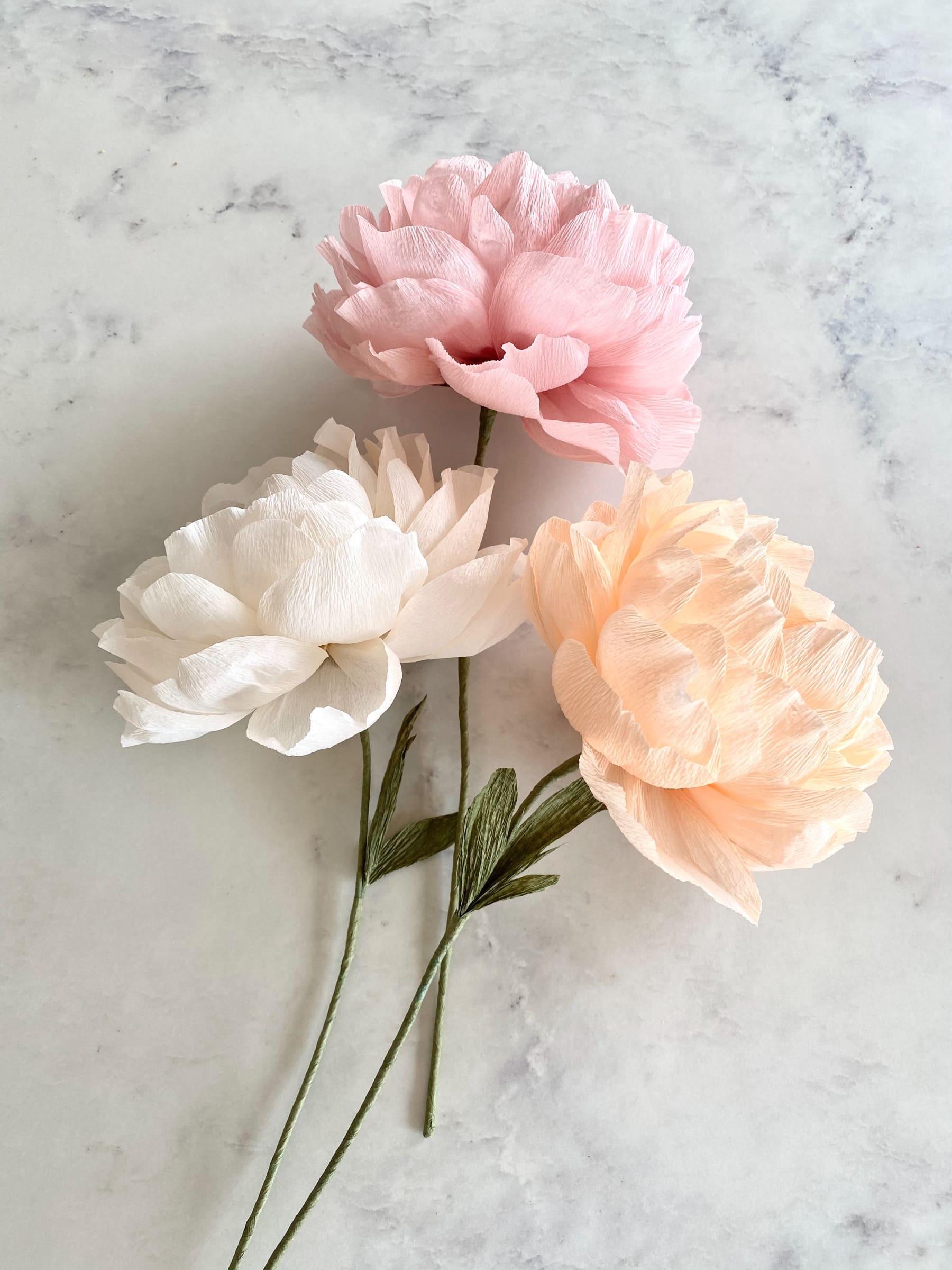 Trio of Soft Pastel Peonies