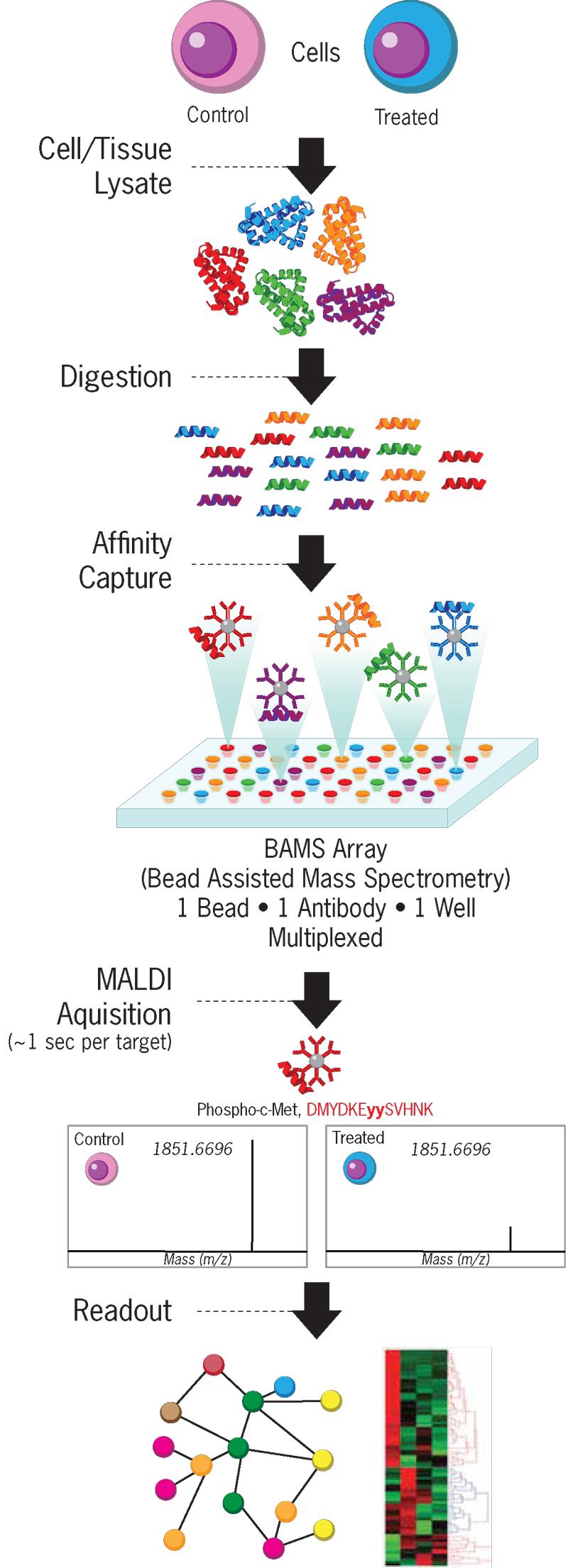 BAMS Workflow